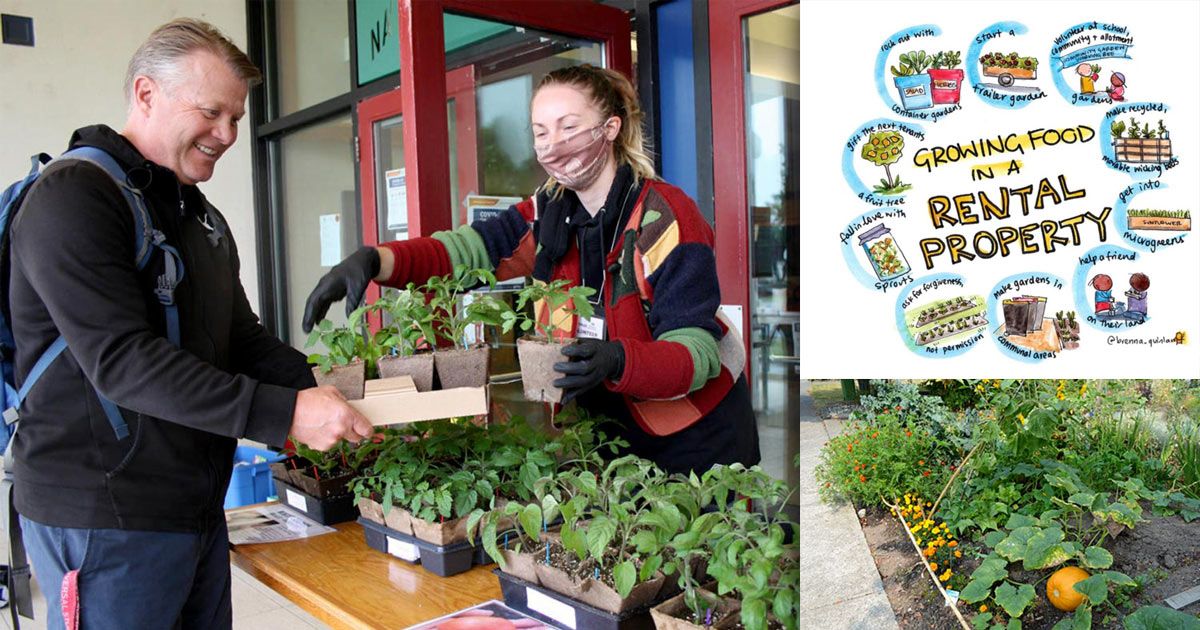Montage of growing resilience photos with people and gardens.